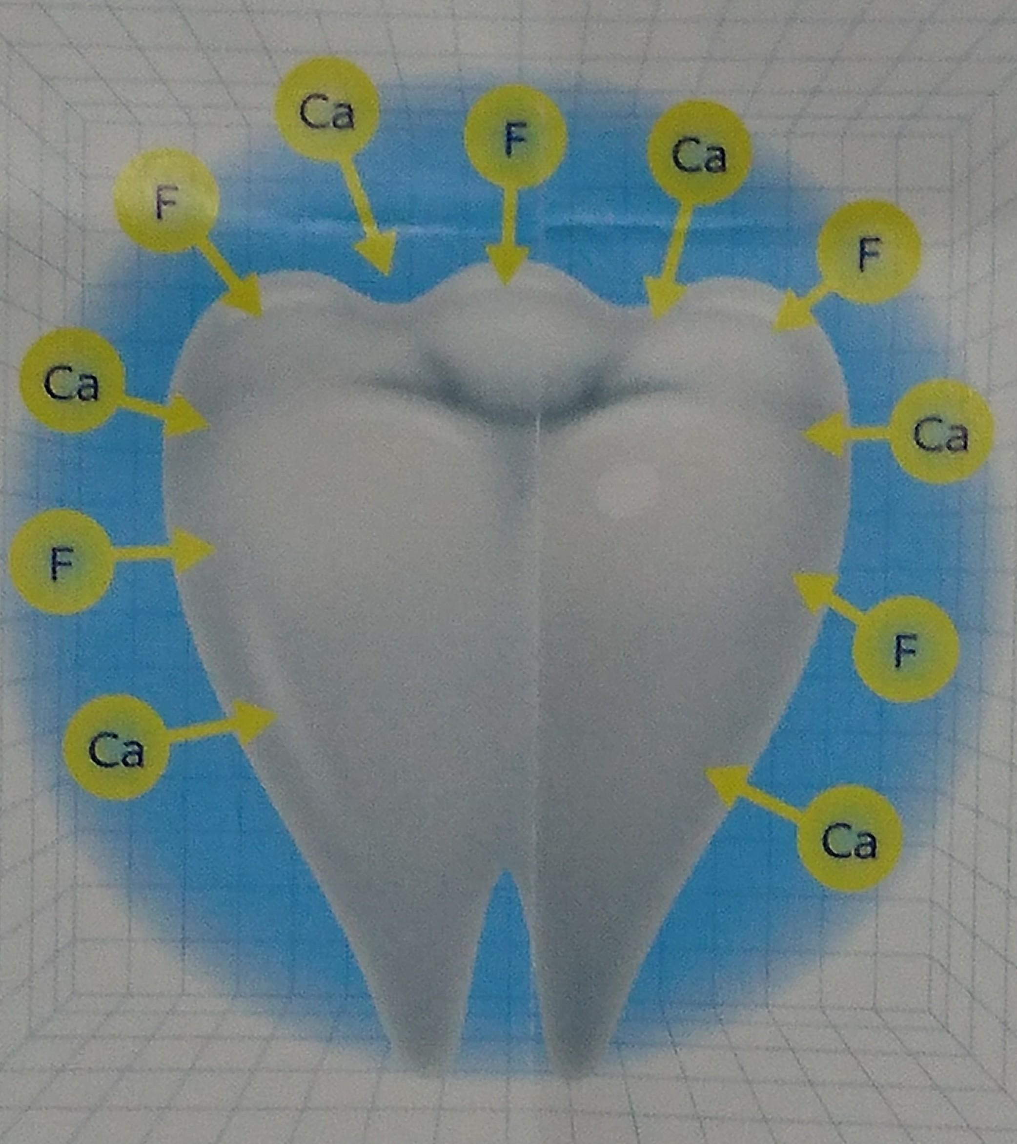 歯 唾液 カルシウム